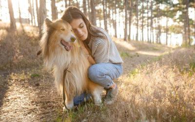 Grundlagen der Hundeerziehung