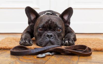 Überlegungen vor der Anschaffung eines Hundes
