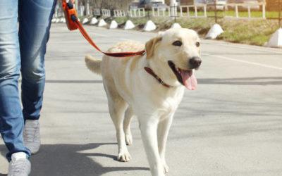 Gelesen: Kleiner Wegweiser für Hundehalter und alle die es werden wollen