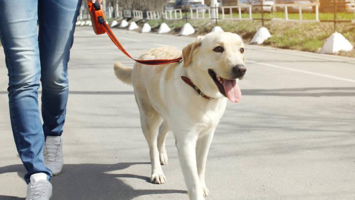 Ein gut erzogener Hund - jeder kann das haben