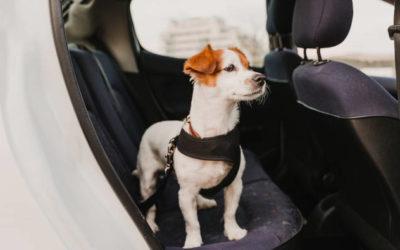 Sicher Auto fahren mit Hund