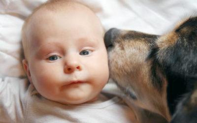 Hund und neugeborenes Baby