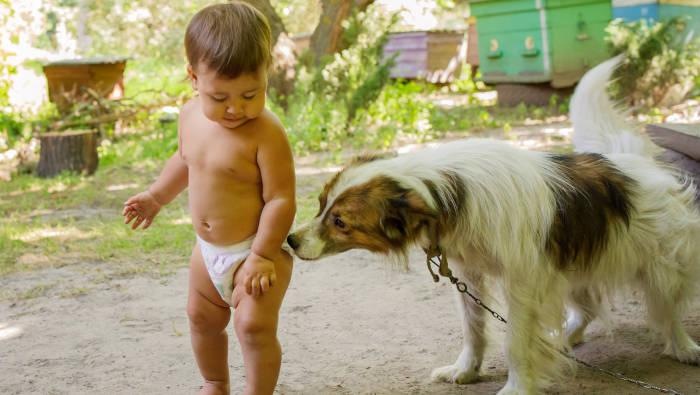 Hund schnüffelt an der Baby-Windel