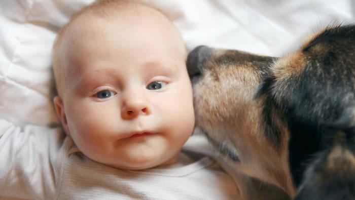 """Der Hund geht ganz sanft mit """"seinem"""" Baby um"""