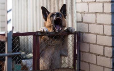 Verhaltensweisen: Der Hund bellt