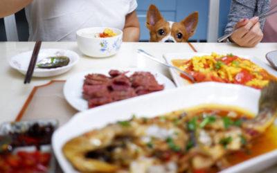 Hundeschule: eine Kurzgeschichte