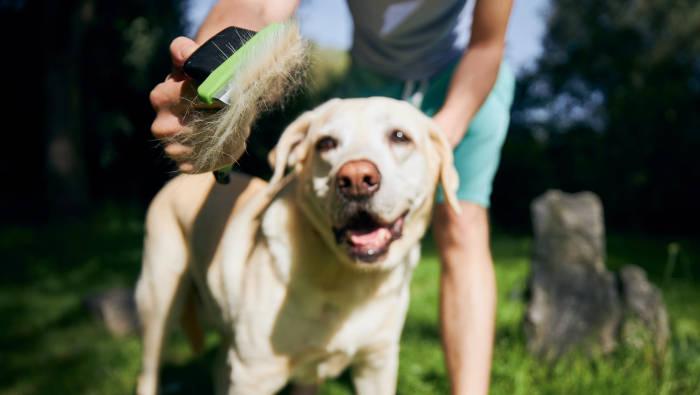 Hund bürsten - lose Haare entfernen
