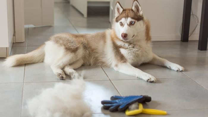 Hund und seine Haare - bei täglicher Pflege
