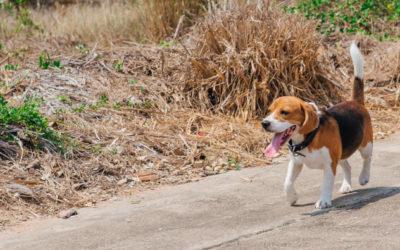 Thermoregulation beim Hund