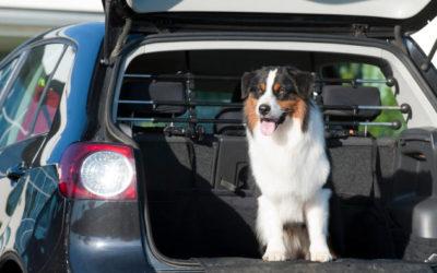 Lange Autofahrten mit dem Hund