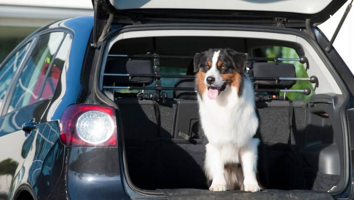 Hund im Auto - Kofferraum mit Trenngitter