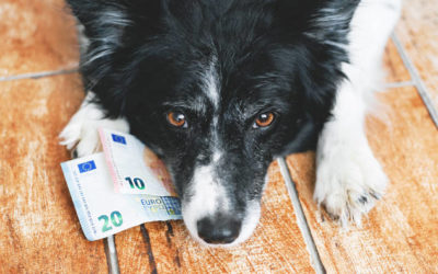 Hundehaltung: Welche Kosten fallen an?