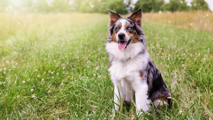 Ein Hund sitzt erwartungsvoll