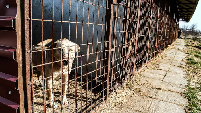 Hund im Tierheim, im Zwinger