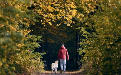 Gründe für und gegen die Anschaffung eines Hundes