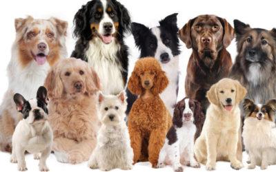 Definition: Was ist eine Hunderasse?