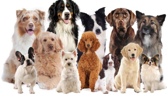 Hunderassen - eine Auswahl an Rassehunden