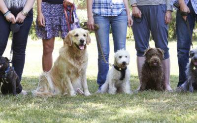 Hundeerziehung: Muss das sein?