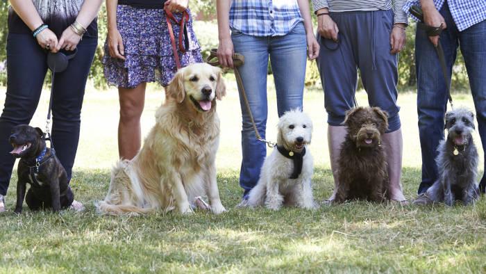 Hundeschule - hier lernen Hundehalter, wie man seinen Hund erzieht