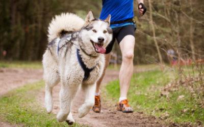 Sport mit Hund und Hundesport