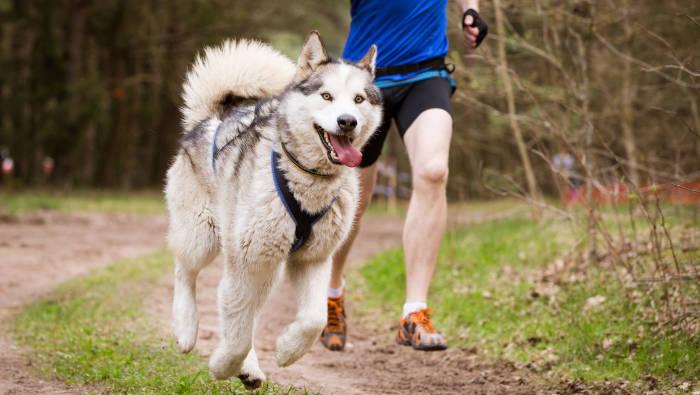 Hundesport - Sport für Hund und Mensch ist besser