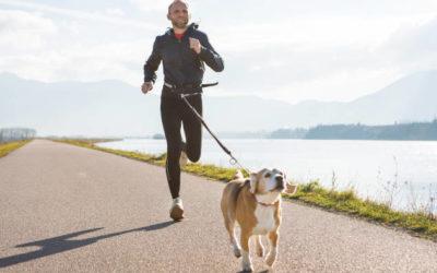 Joggen und Laufen mit Hund