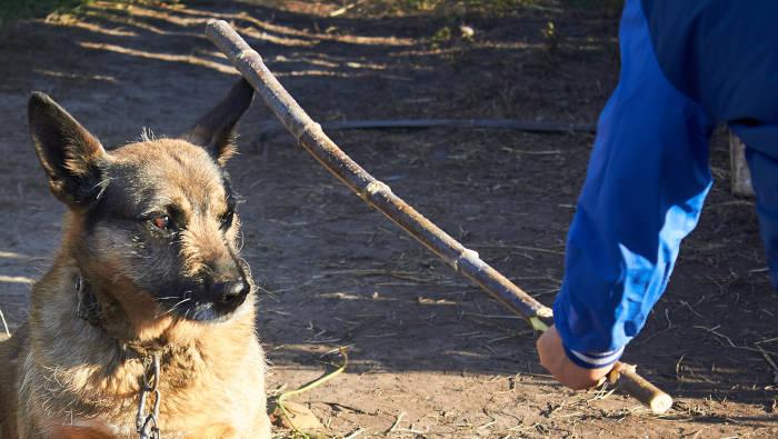 Ein Hund wird misshandelt - das war früher so üblich