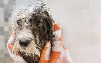 Baden oder waschen des Hundes