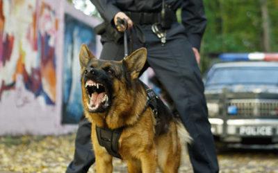 Hunde in Kriminalromanen