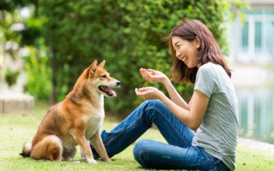Spaß mit Hund