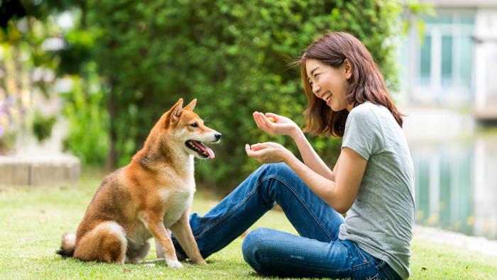 Hund und Mensch haben Spaß zusammen