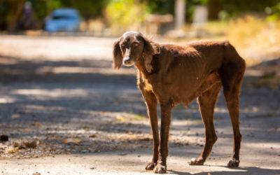 Ein Hund aus dem Ausland