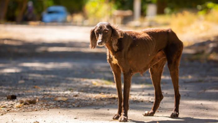 Streunender Hund in Südeuropa