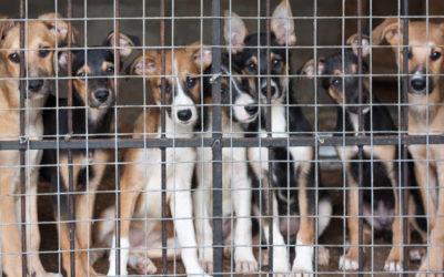 Vom Tierheim in den Knast? Eine Hundegeschichte