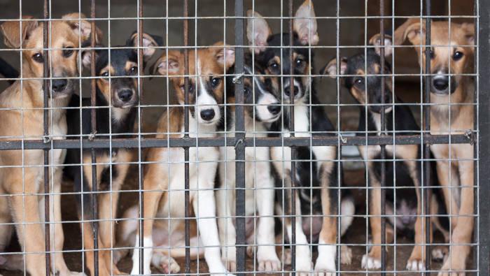 Tierheim - wie Knast für Hunde?