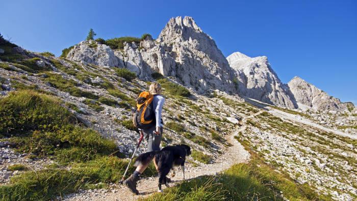 Urlaub mit Hund - Wandern in den Bergen