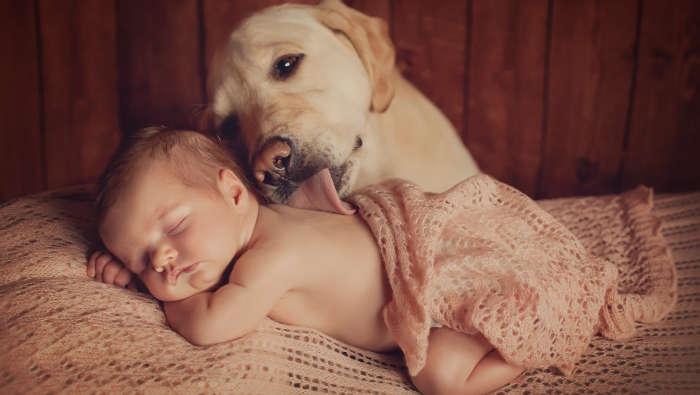 Hunde lieben Babywindeln - und Babys!